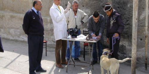 Ev hayvanlarına ücretsiz kuduz aşısı