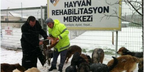 Sahipsiz sokak hayvanlarına belediye desteği