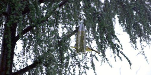 Kuşlara pet şişede yemlik