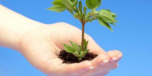 'Sizin de Dikili Bir Ağacınız Olsun'
