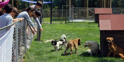 Öğrenciler, hayvan barınaklarını ziyaret etti