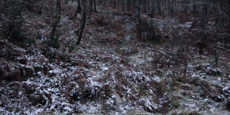 İstanbul'da Kar Yağdı, Aydos Ormanı Beyaz Örtüyle Kaplandı