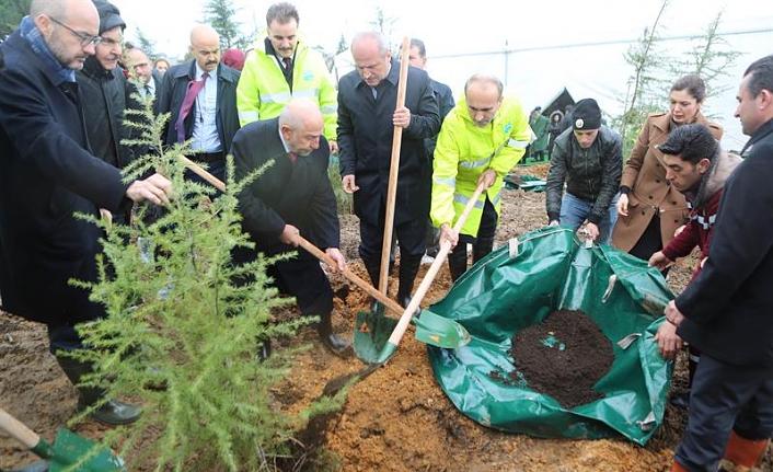 Ağaçlandırma Çalışmalarının İlki Arnavutköy'de