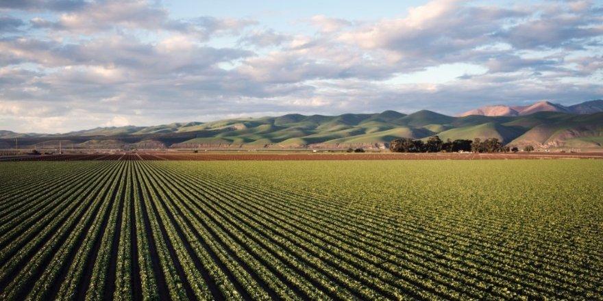 Tarım İlacı Kullanımı Yüzde 29 Arttı