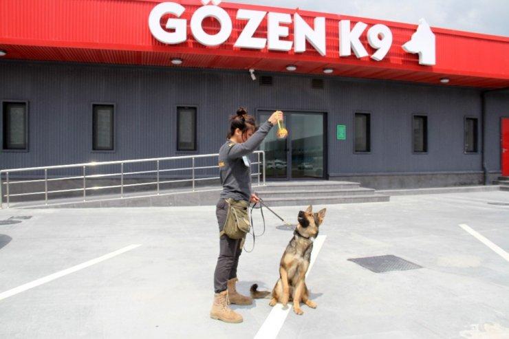 Apron Güvenliği Özel Köpeklere Emanet