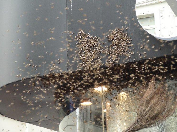 İstiklal Caddesi'ni arılar bastı