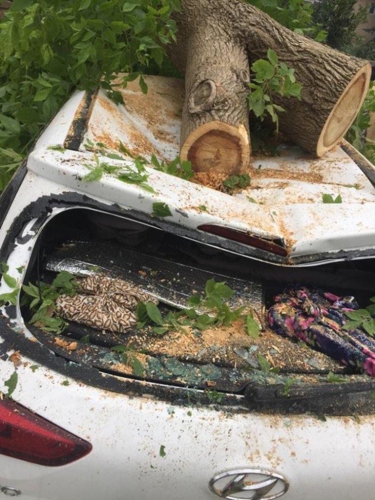 Cami bahçesindeki aracın üzerine ağaç devrildi