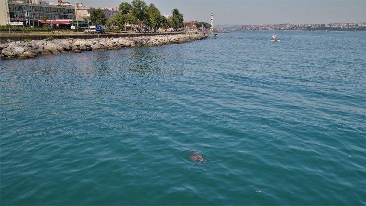 Sevimli Yunuslar İstanbul boğazında