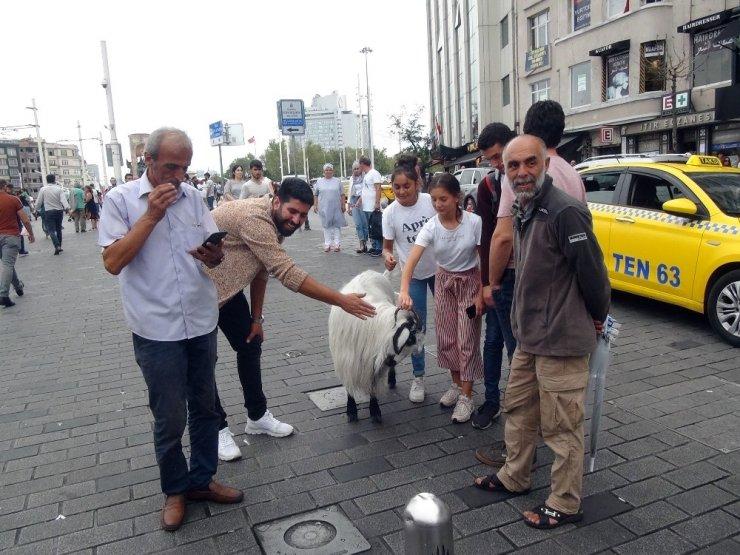 Keçisiyle Taksim'e çıktı, vatandaşların ilgi odağı oldu